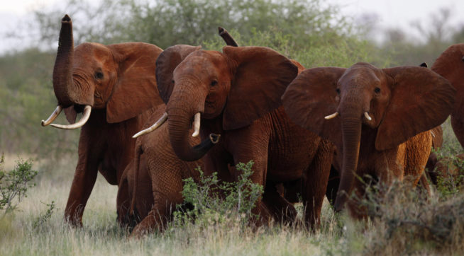 Trump Delays Change in Elephant Hunting Policy